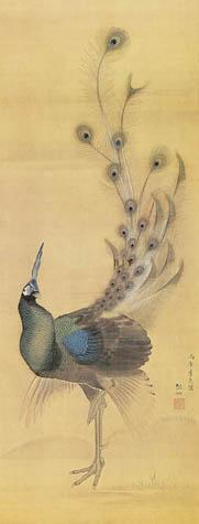 sosen-peacock3